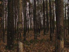 Woods I by gilraen-stock