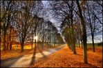 Colors of Fall II by Roman89