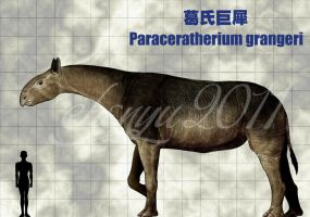 Paraceratherium grangeri by sinammonite