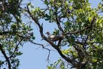 College: Dove in Tree by ShadowKnight508