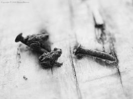 Two Toads Two Nails - bw III by wroth