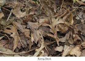 leaf texture stock by Rainny-Stock
