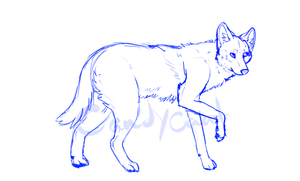 Coyote Sketch by CandyCaane