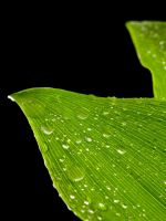 Isolated Plant 22900164 by StockProject1