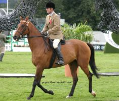 Bay horse showing7 by popui