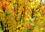 Autumn Color...Sonoma Co. CA by smfoley