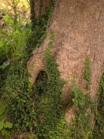 hole in tree by equusstock