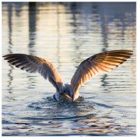 Seagull by Initio