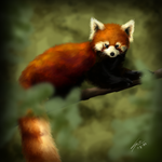 Speed Painting - Red Panda by ClemiKinkajou