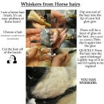 horse hair whiskers application by Crystumes