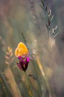 Orange butterfly in the rising sun by victoria-P