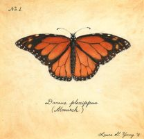 Monarch by LG-Young