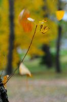 The colors of autumn 2 by Seth890603