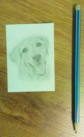 Golden Lab [Small size] by 0glOk