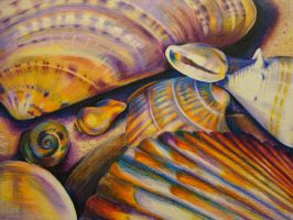 Shells by SaraSchool