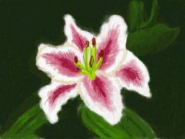Pink and White Lily by Nethilia