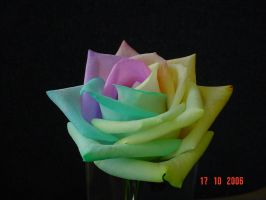 Happy Roses Pastel by RAINBOWedROSES