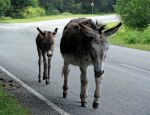 donkeys by smevstock