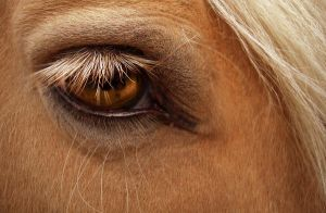 Horse's Eye by Sugargrl14