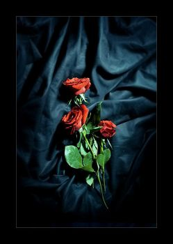 Red roses by nico-blue