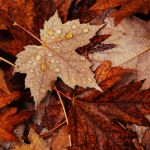 Autumn's Leaf Litter by StoneE608