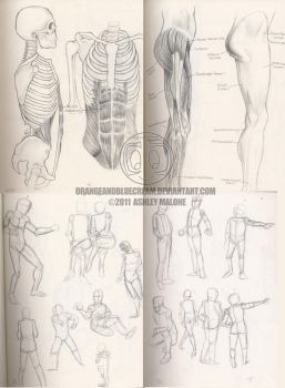 School art: Anatomy and gesture sketches by Orangeandbluecream