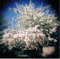 Explosion Of White by Lomo440