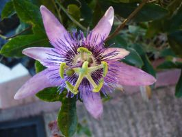 Exotic flower 1 by Cat-in-the-Stock
