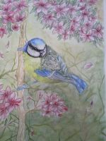 Watercolour Blue Tit by Edenfur