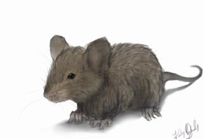 Mouse by Warly