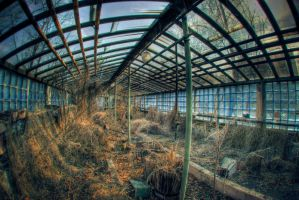 Greenhouse effect by Brute-ua