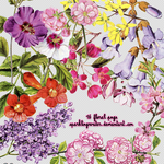 floral png by sparklingwater