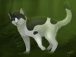 Crowfrost of ShadowClan by xxMoonwish