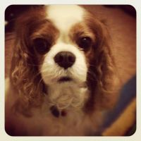 ~Timmy the Cavalier~ by Belynx16