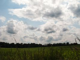 Blue Cloudy Sky over a Corn Field by RowyeStock