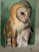 Owl first time using oil pastels by Ajss51