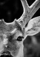 Up Close and Personal by Carise