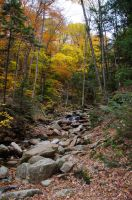 White Mountains  Fall Foliage  250 by FairieGoodMother