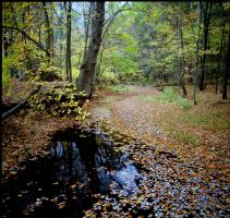 Greasy Creek fall leaves by harrietsfriend