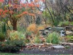 Fall colors by Chrissice