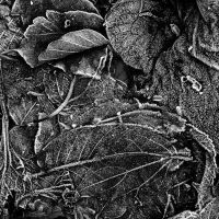 leafs on the ground by augenweide