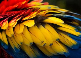 Primary Colors Revisited by DeniseSoden