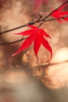 autumn colours 10 by AngiWallace