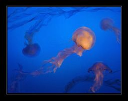 Waltz of the Jellyfish by DarthFar