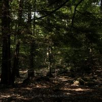 Walking in the Forest ... by Me-Myself-And