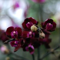 Festival of orchids by keffi