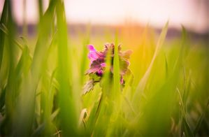 spring moments 2 by mellowpt