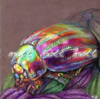 Beetle Doryphore by So-naa