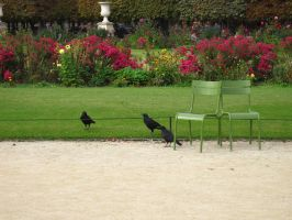 PARIS: Jardin des Tuileries 13 by beekay84