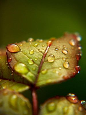 Leaf and the rain... by Ikabe